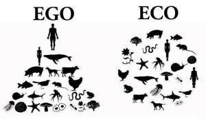 ego:eco