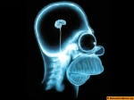 homer-simpsons-brain